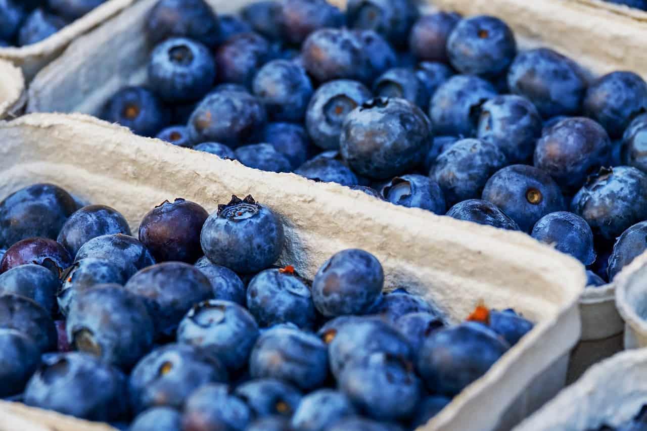 Blaubeeren – Foto: Pixabay