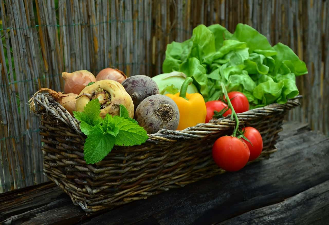 Gemüse ist so vielfältig – Foto: Pixabay