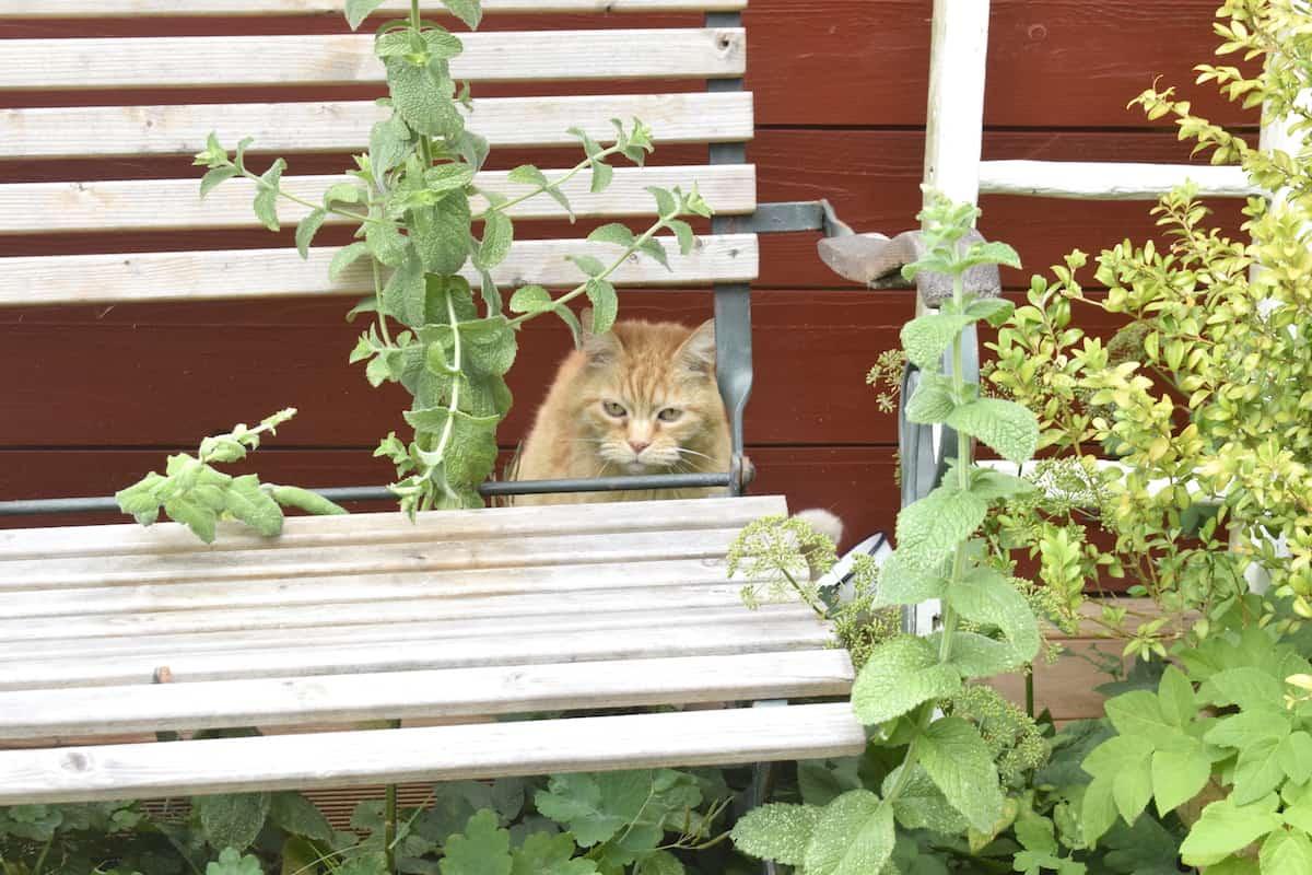 Katze Molly – Foto: Nicole Stroschein