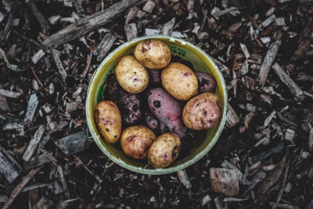 Kartoffeln in einer Schale – Foto: Jonathan Kemper on Unsplash